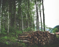 Safeguarding The Forests Through Reduced Impact Logging (RIL)