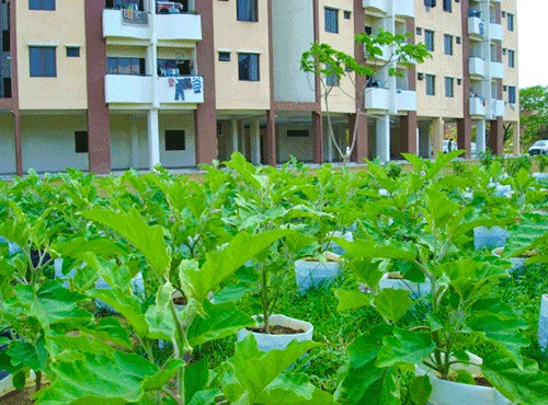 Urban Agriculture: A Way Forward for Food Security